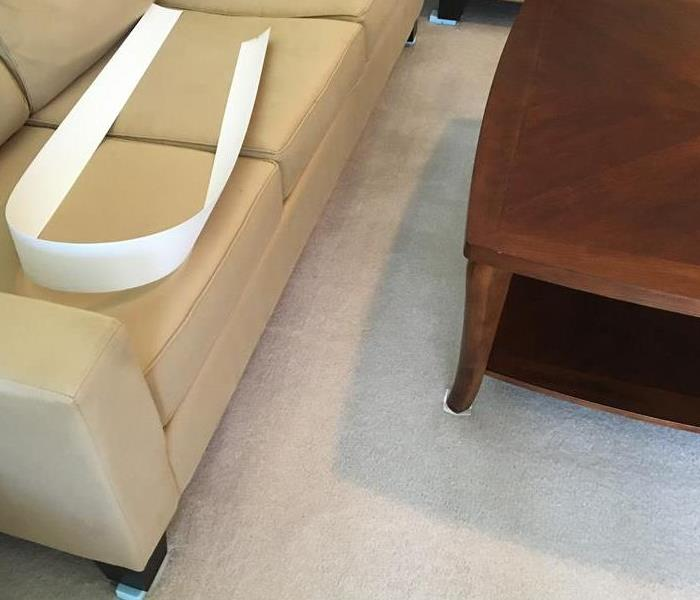 Clean living room carpet with couch and coffee table