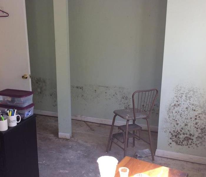 Moldy walls in room after Hurricane