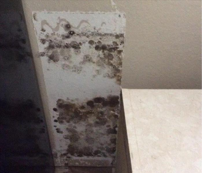 Mold Remediation Hot and Humid this Summer, So is your Home!