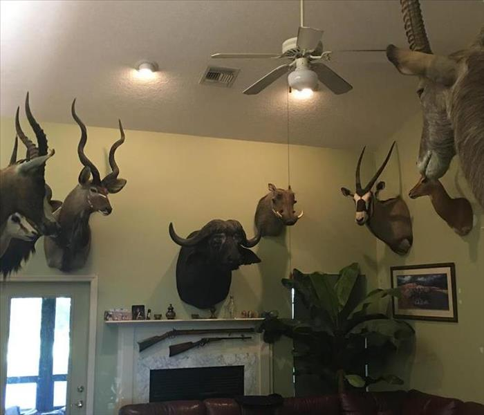 Removing soot from trophy mounts