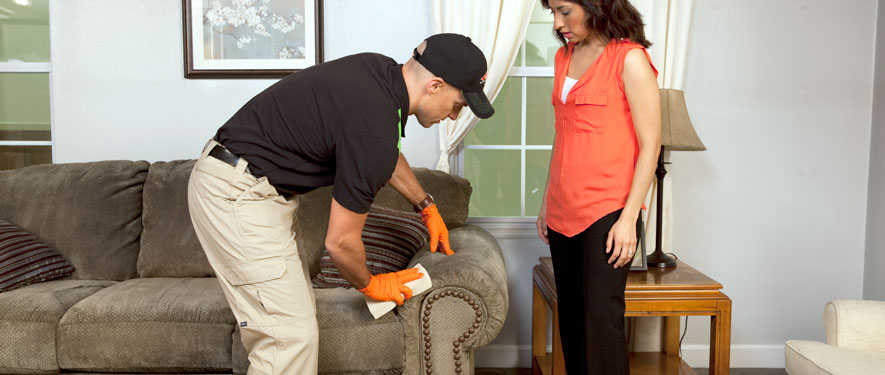 Mount Dora, FL carpet upholstery cleaning