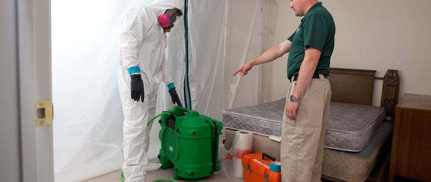 Mount Dora, FL mold removal process